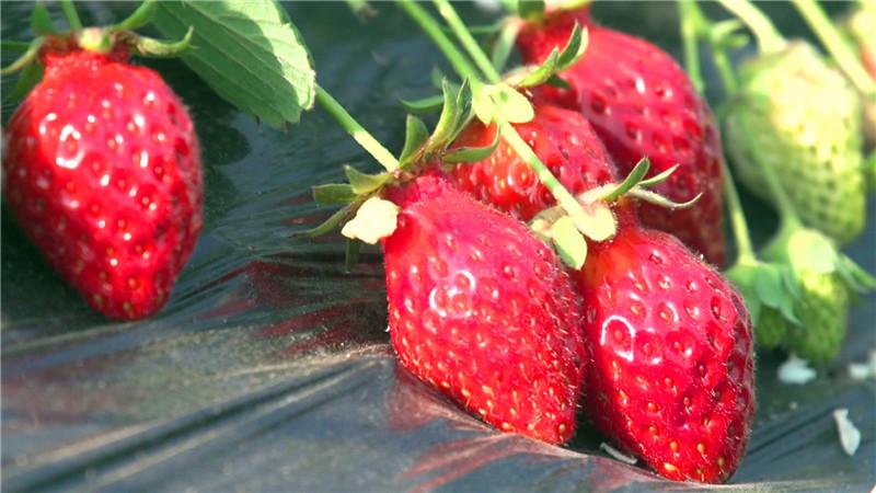 一休草莓园包装_20180316103802.JPG
