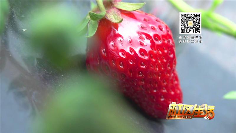 一休草莓园包装_20180316104741.JPG