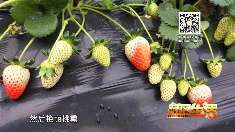 一休草莓园包装_20180316105435.JPG