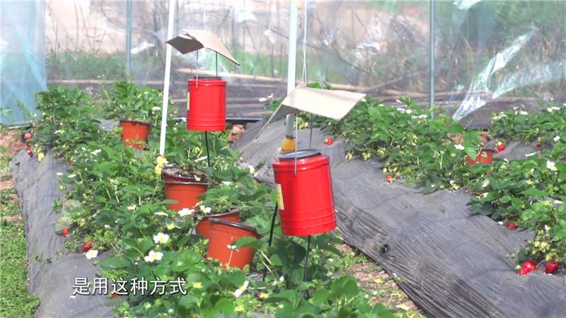 一休草莓园包装_20180316110053.JPG