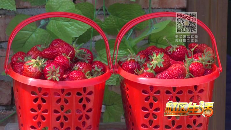 一休草莓园包装_20180316110130.JPG